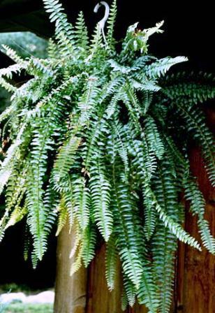 نباتات الزينة الخارجية بالصور 56u.jpg