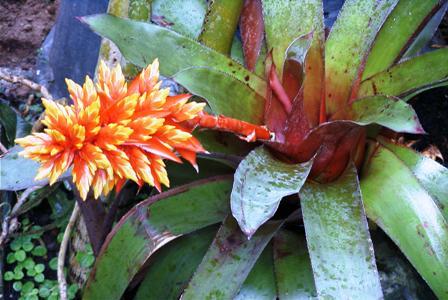 نباتات الزينة الخارجية بالصور ry7ik.jpg