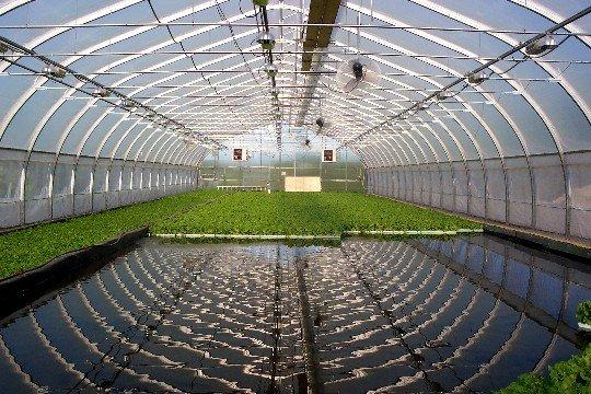 الزراعة بدون تربة د اشرف عمران
