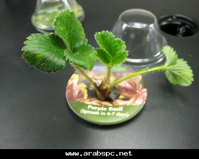 تطور في الزراعه بامكانك ان تزرع داخل البيت 0fb135d20f