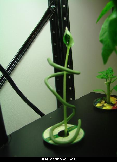تطور في الزراعه بامكانك ان تزرع داخل البيت 19f5eac2b1