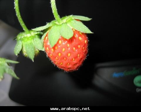تطور في الزراعه بامكانك ان تزرع داخل البيت 1b9700be10