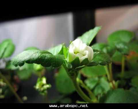 تطور في الزراعه بامكانك ان تزرع داخل البيت 22079099a1