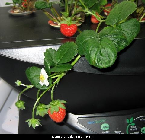 تطور في الزراعه بامكانك ان تزرع داخل البيت 373d23a910