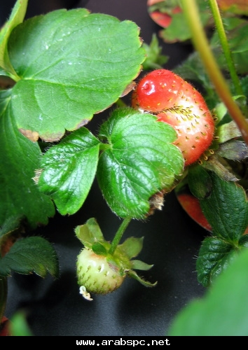 تطور في الزراعه بامكانك ان تزرع داخل البيت 57791fd64b