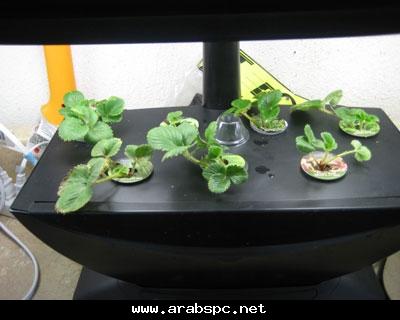 تطور في الزراعه بامكانك ان تزرع داخل البيت 602c200795