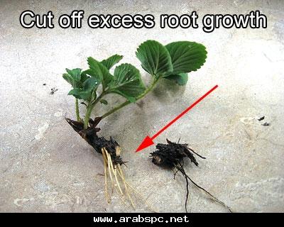 تطور في الزراعه بامكانك ان تزرع داخل البيت 6b014d54b2
