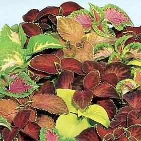 بعض صور نباتات الزينة