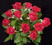 الورد و ذي زهرة الكبيرة ذات نهاية مخروطية حادة وهذا